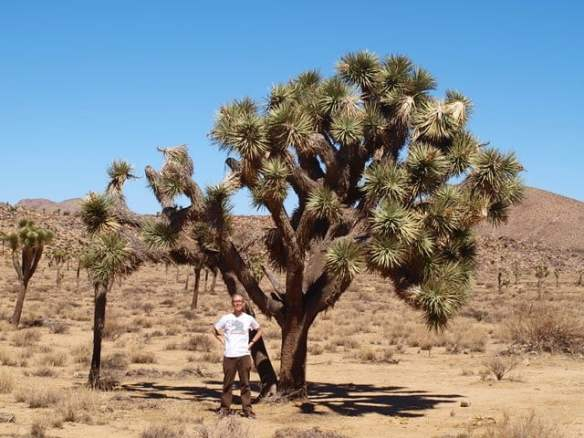 Joshua Tree (Yucca brevifolia) - thanks Lynda for this picture