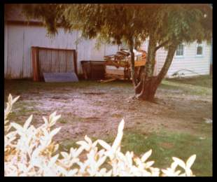 Kowhai tree back in the 1970s