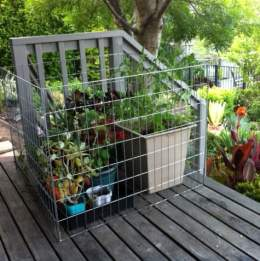 Possum cage around vulnerable plants