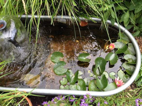 A simple water feature in our backyard. Photo Meleah Maynard