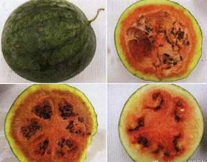 CGMMV_wmelon-fruit