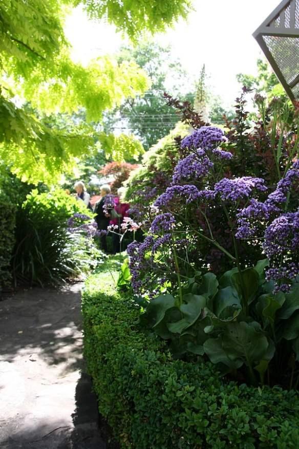 Garden-Design-Fest-Cameron Paterson-Garden-Limonium-perezii