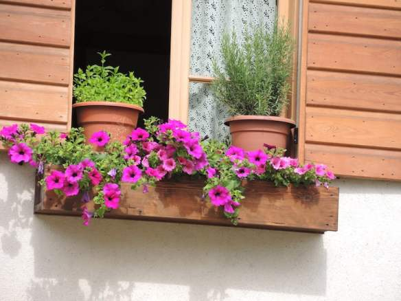 Window Boxes of the Dolomites Photo Helen McKerral27