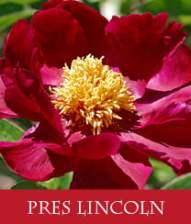 President-Lincoln