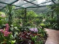 Singapore Botanic Gardens orchids