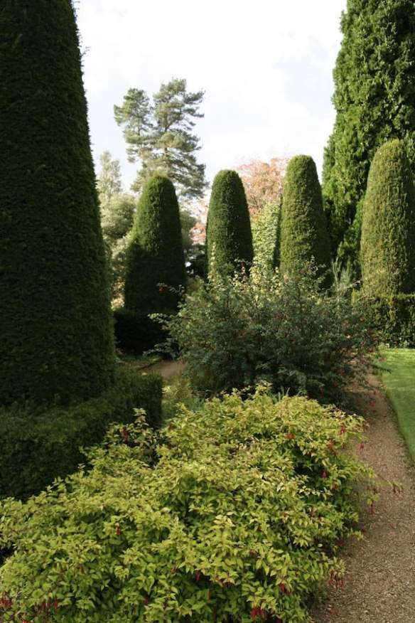 Hidcote hedges and conifers
