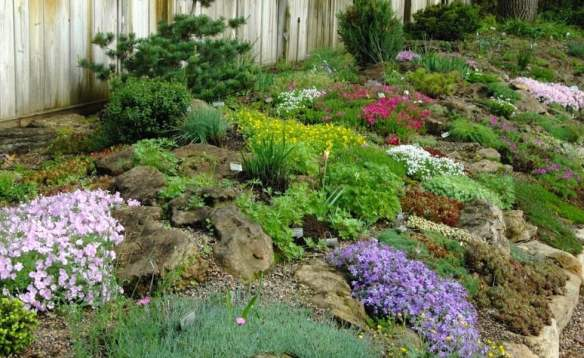 Alpine garden along Betty Ann's driveway