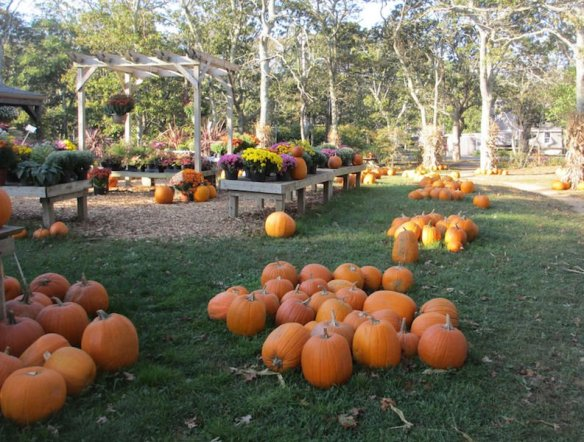 Festive pumpkins for fall and Halloween