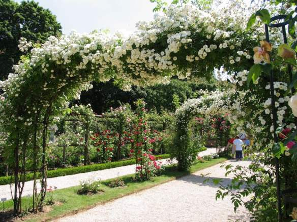 Parc de Bagatelle, Paris, with climbing, standard and bush roses everywhere