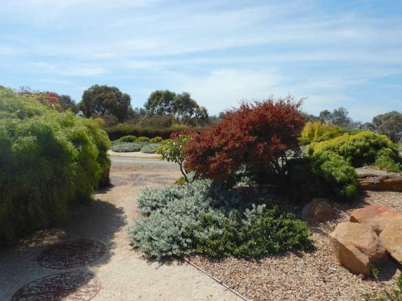 Eremophila glabra and Dodonaea showing its rich red seed heads