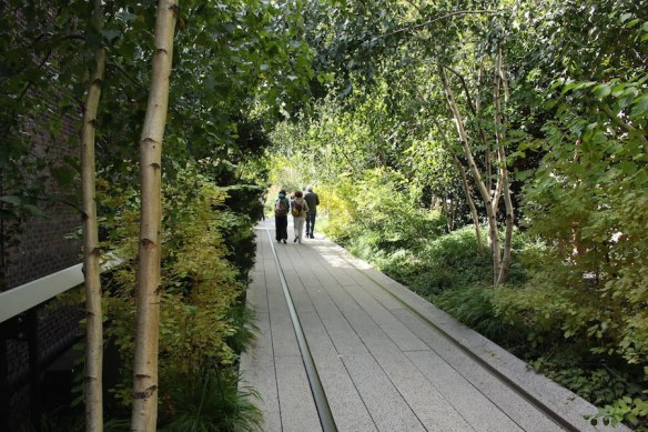 High Line NYC: a shady pathway of grey birches