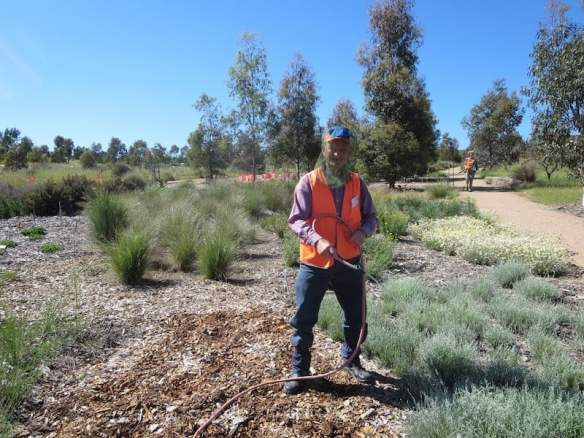 Volunteer in the Southern Tablelands Ecosystem Park in the National Arboretum, Canberra ACT