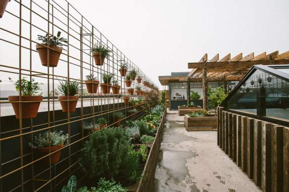 Rooftop bar at The Cellar Door. Planting design Phillip Withers. Photo Stuart Cox