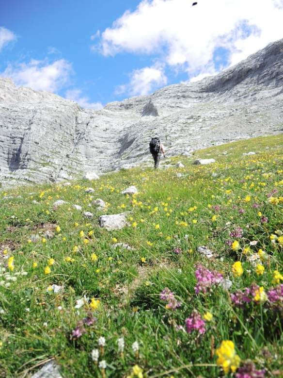 30 field of wildflowers in the Dolomites