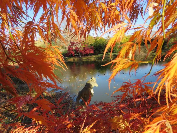 https://i0.wp.com/gardendrum.com/wp-content/uploads/2016/02/Fall-foliage-at-Old-Westbury-gardens.-Photo-Vince-Kish.jpg?resize=584%2C438