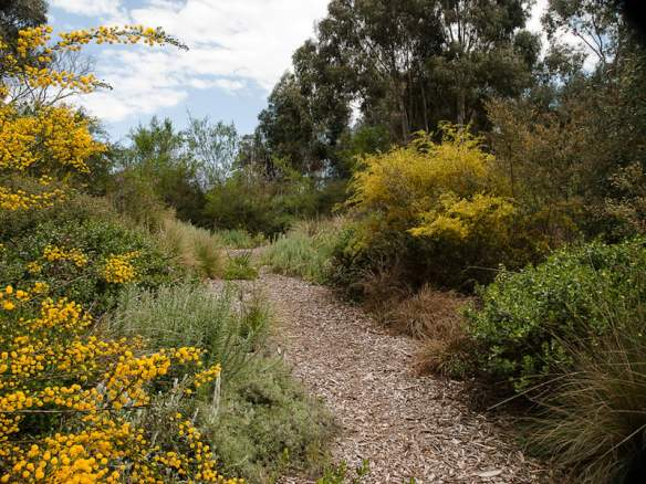 Meandering path through Goodinia in a Sam Cox designed garden (Anne Vale)