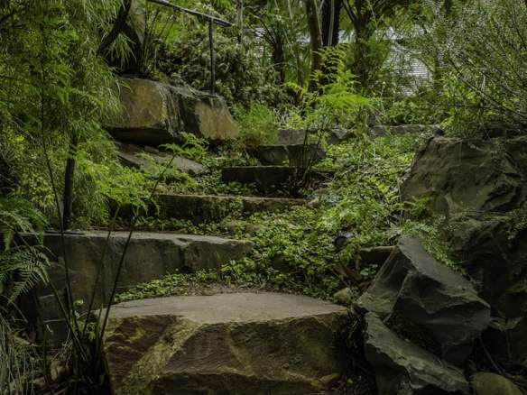 Great craggy steps lead the garden visitor up the gully in Philip Johnson's cool climate garden at Olinda in the Dandenong Ranges. (Anne Vale)