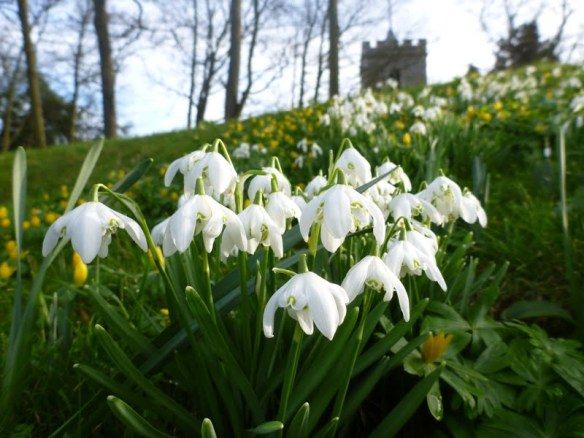 Snowdrops and church at Benington Lordship