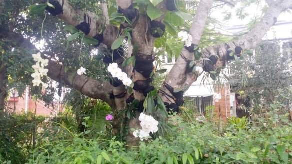 This tree full of orchids stops many parents and children on their way to school each morning