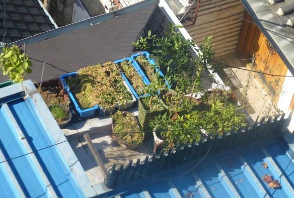 Rooftop garden in Seoul
