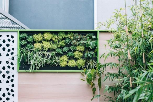 Vertical garden in Port Melbourne. Design Phillip Withers Landscape Design