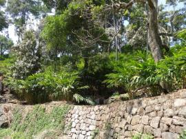 Stone wall and terracing help retain soil during the monsoon downfalls. The wettest months are June, July and August at Munnar, Kerala.