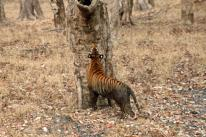 After a cooling mud bath could this be lunch? Nagarhole National Park.