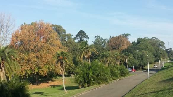 Callan Park eastern parkland