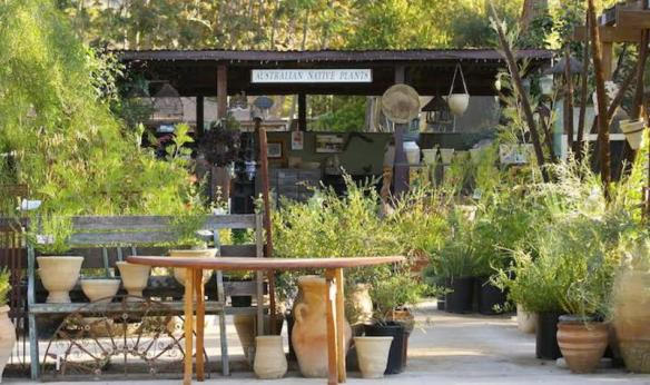 Australian Native Nursery, Ojai California