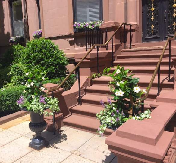 Containers in Boston with white mandevilla, purple angelonia and variegated lamium