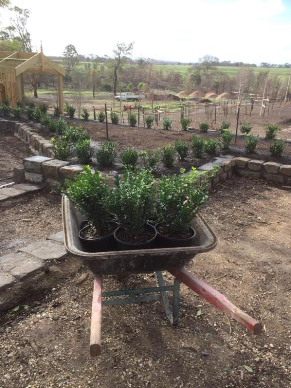 Narmbool post-fire garden restoration is in progress; new plantings have been reassessed. [Photo Gillian Armstrong]