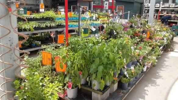 Hardware store plants
