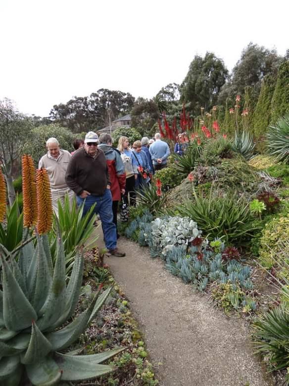 Attila Kapitany's succulent garden