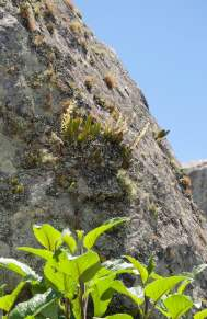 Tiny orchids perched on rocks