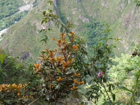 Beautiful but unknown mountain dweller