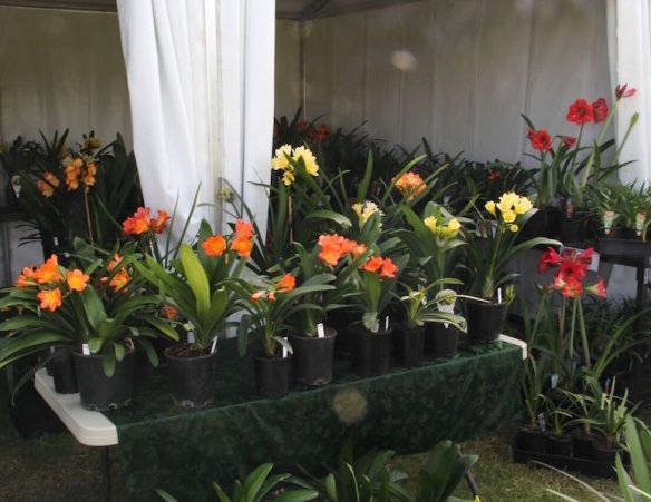 cliveas-on-show-at-the-brisbane-international-garden-show