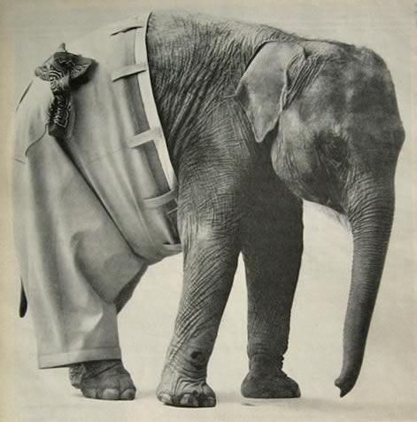 elephant_pants