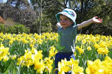 Everyone loves Daffodils at Rydal