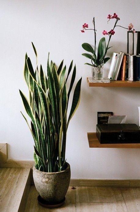 5-errores-plantas-interior-gardeneas-lugar