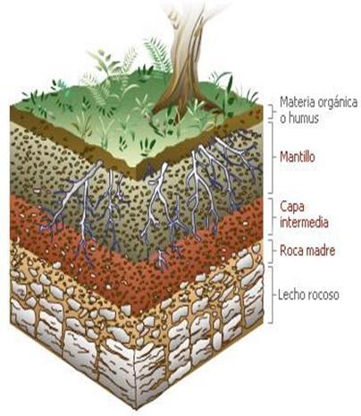 diccionario-jardineria-gardeneas-edafologia