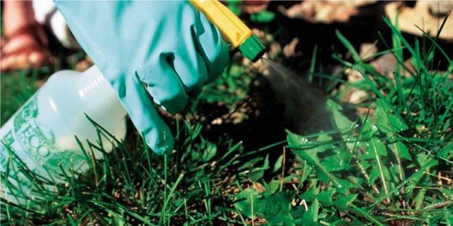 diccionario-jardineria-gardeneas-herbicida