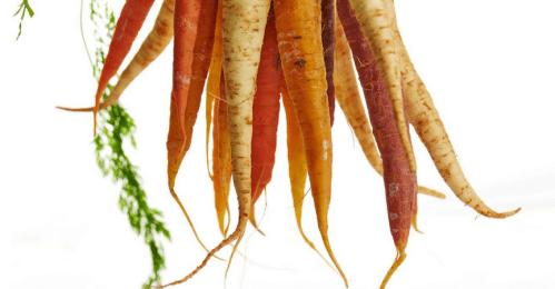 Zanahoria-Producto-Ecol-ogico-Orgánico-Siembra-Noviembre