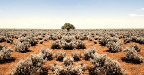 riego-cultivos-norte-sur-españa-gardeneas-cambio-climático-sector-agrario