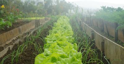 Qué-cultivar-en-agosto