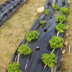 Plástico-negro-siembra-huerto-invernadero-cultivo-agrcicultura