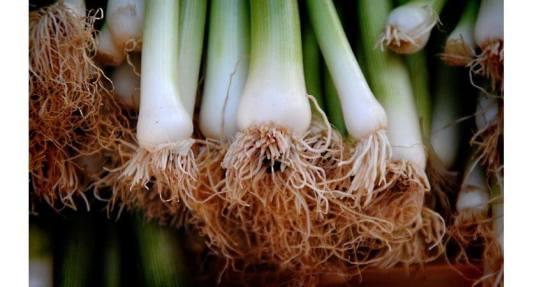 huerto-urbano-cultivo-primavera-jardinera-mayo