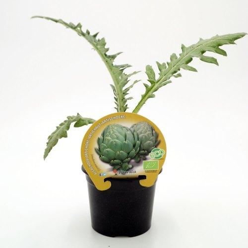 plantel-alcachofa