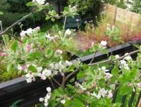 Grow a Balcony Garden - Garden Easy