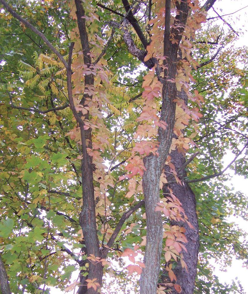 Autumn colors (2/2)