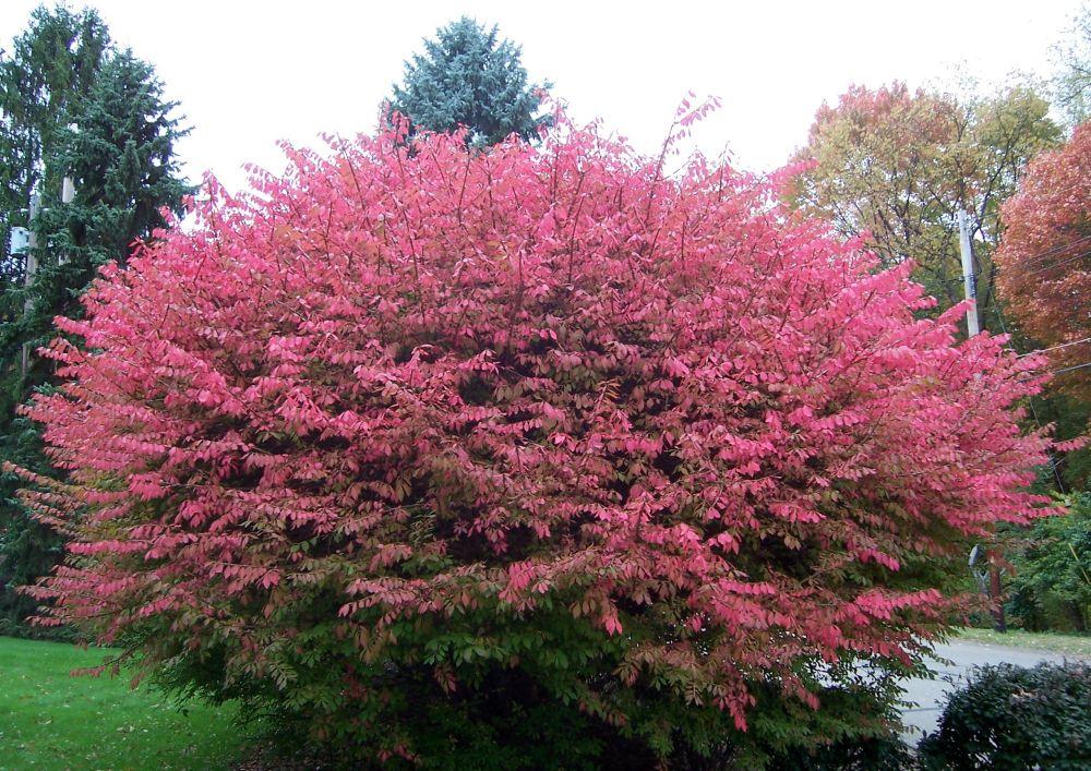 Autumn colors (1/2)
